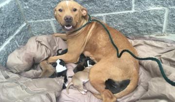 Собака не бросила своих щенков, когда хозяева выбросили их на улицу
