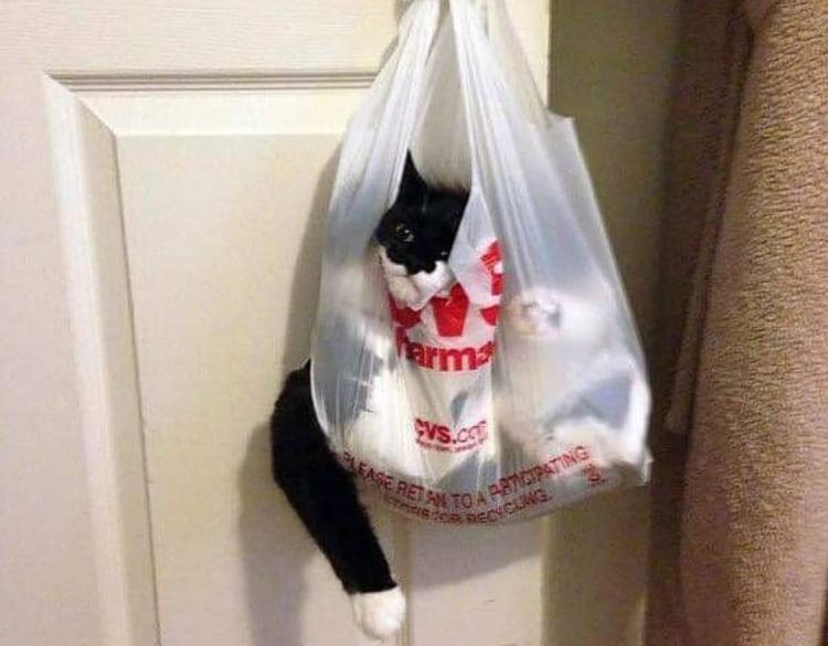 Доказательство того, что кошки найдут приключения везде