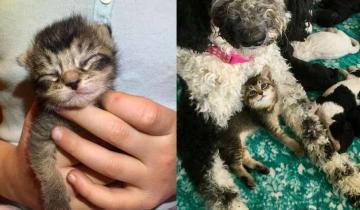 Один котенок — две разные приемные мамы: история Налы