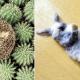 25 фото, которые показывают, что животные могут заснуть в любом месте и в любое время