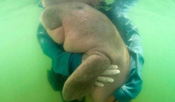Малыш дюгоня обнимается со своими опекунами