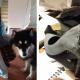 Пёс погрыз любимые туфли девушки за 500$ и парень нашел способ исправить ситуацию