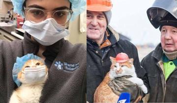 Позитивная подборка: кошки рабочих профессий!