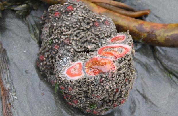 Кровоточащие камни