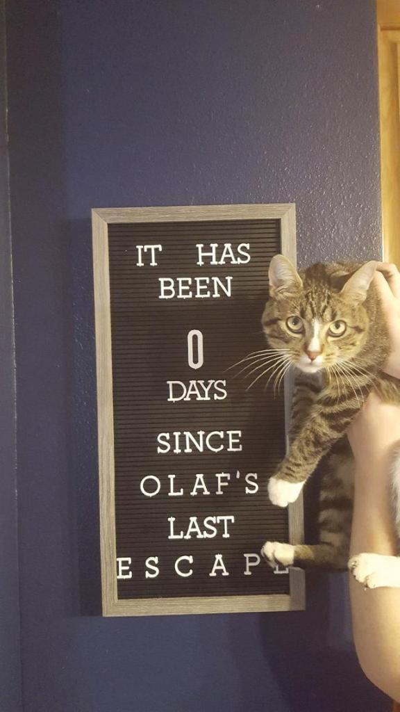 Самые забавные проделки кошек на этой неделе