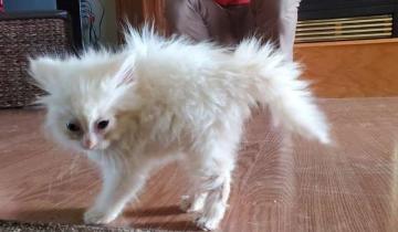 Никто и не думал, что в маленьком котенке скрыт такой талант!