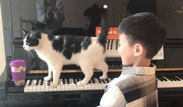 Коту не нравится, что хозяйка играет на пианино вместо того, чтобы уделять внимание ему