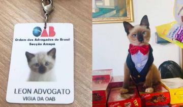 Бездомному бразильскому котенку дали галстучек, бейджик и должность помощника адвоката