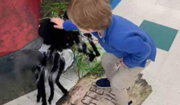 Найден идеальный кандидат для спасения человечества. 3-летний малыш дал бой огромному пауку!