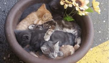 Самые забавные и очаровательные котики недели!