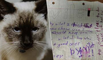 Никто в приюте не мог сдержать слез, читая записку на ошейнике кошечки