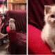 Улыбающийся во время фотосессии котенок влюбил в себя половину Интернета