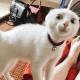 Примеры, что кошки никогда не устают от троллинга людей