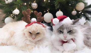 Как спасти новогоднюю елку от покушений кошек: изящный и праздничный способ!