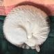 Удивительные видео о том, что кошки умеют вести себя правильно и это так мило!