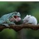 Лягушка передумала есть мышку и решила с ней подружится