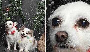 Очаровательные и забавные песики помогут скрасить ожидание праздников
