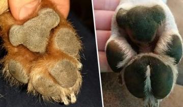 Подушечки на лапах собак похожи на мишек-коал и теперь вы не сможете это развидеть!