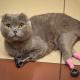 Кошка, которая отморозила лапки на морозе, получила второй шанс в виде протезов