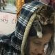 14 кошек, которые променяли совесть на желание быть хозяевами в доме
