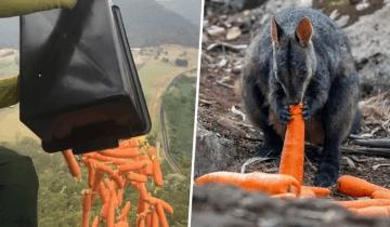 Морковку разбрасывают с самолетов: австралийцы спешат накормить спасенных диких животных