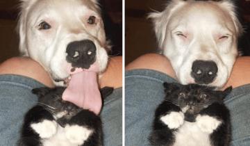 Глухой, слепой, но абсолютно счастливый пес изо всех сил заботится о других животных