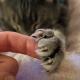 14 доказательств, что мы, люди, едва ли заслуживаем прислуживать таким замечательным котикам!