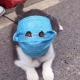 Терпи, Мяо! Фото кота в защитной маске не по размеру стало вирусным в соцсетях.
