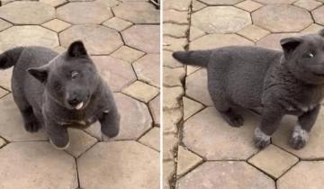 Щенок Гао-Мяо заставляет пользователей соцсетей гадать, кошка он или собака