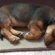 «Гав-гав» в час ночи – значит счастье привалило! Катя ночью подобрала щенка в подъезде