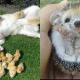 12 детенышей животных, от которых сложно отвести взгляд
