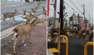 Пока люди сидят по домам, животные стали хозяевами городов