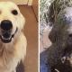 Хвостатые грязнули: фото собак до и после прогулок