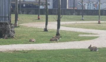 Города без людей: итальянский Милан заполняют дикие кролики