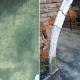 Жители Венеции в благоговейном трепете: впервые за сотни лет в каналах струится прозрачная вода!