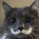 Роскошные усы вновь входят в моду. Для начала — у котов!
