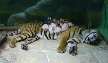 Невероятные фото животных, которые не вообще дружат, но вопреки всему стали семьей
