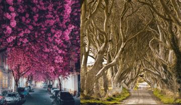 7 самых красивых в мире «живых» тоннелей из деревьев. Выглядят сказочно!