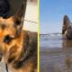 Пес несколько часов плыл к берегу, чтобы спасти своего хозяина