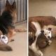 Щенуля Эдна обладает уникальным даром — все собаки согласны быть её подушкой