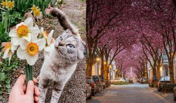 Жители разных стран делятся фото того, как весна шагает по планете