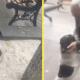 Мужчина встретил пса, которого напрасно искал целых 3 года