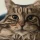 Благодарная за спасение кошка каждое утро приносит тапочки хозяйке