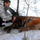 Тигр пришел к людям за помощью. Он не мог избавиться от петли на шее
