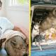 Мужчина подбирает животных, от которых отказались хозяева из-за старости или болезни