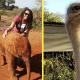 Маленького осиротевшего слоненка утешил взрослый страус