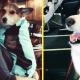 Девушка забрала собаку у нерадивого хозяина, но оказалось, что пес умеет помогать людям!