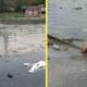 Парень полез в яму с грязной водой и мусором, чтобы спасти щенка