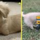 12-летний мальчик собрал из конструктора Лего коляску для щенка с инвалидностью