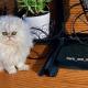 Кот с испуганным выражением мордочки веселит пользователей Интернета